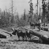 Old Logging Photo